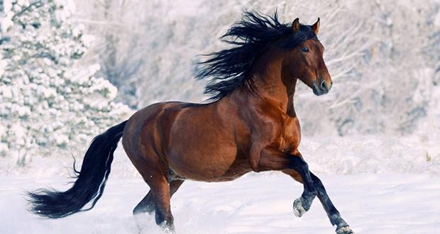 تعبیر مشاهده اسب در خواب