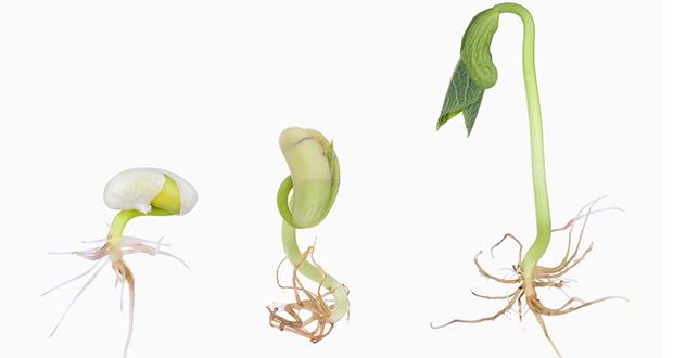 چرا گیاه در خاک رشد می کند؟