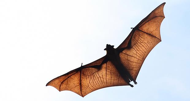 چگونه خفاش می بیند؟