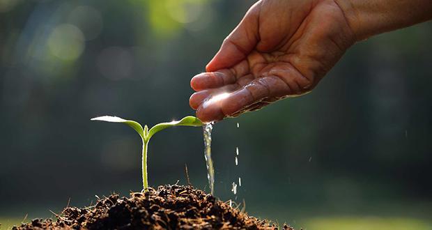 چگونه دانه می روید؟