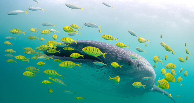 چگونه ماهی ها تولید مثل می کنند؟