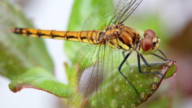 چگونه حشره تنفس می کند؟