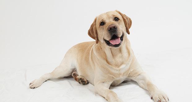 چگونه سگ ها نامگذاری شدند؟