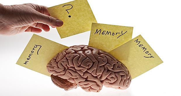آیا نوع تغذیه می تواند بر قدرت حافظه تاثیرگذار باشد؟