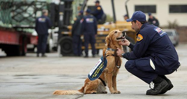بررسی شیوه های آموزش سگ های امداد و نجات