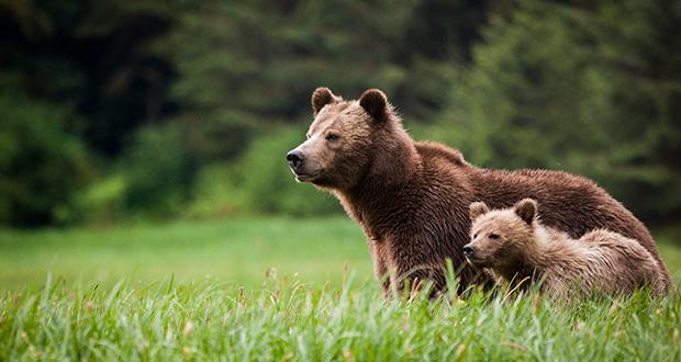 با زندگی خرس ها آشنا شویم