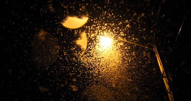 چرا حشرات به سوی نور جذب می شوند؟
