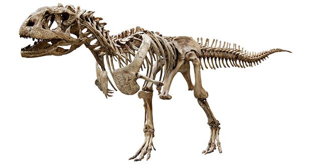 چگونه انسان از وجود دایناسورها آگاه شدند؟