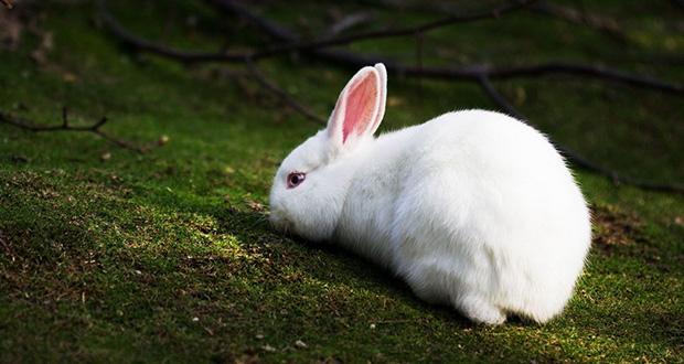 تعبیر مشاهده خرگوش در خواب