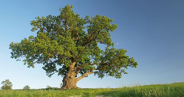 تعبیر مشاهده درخت در خواب