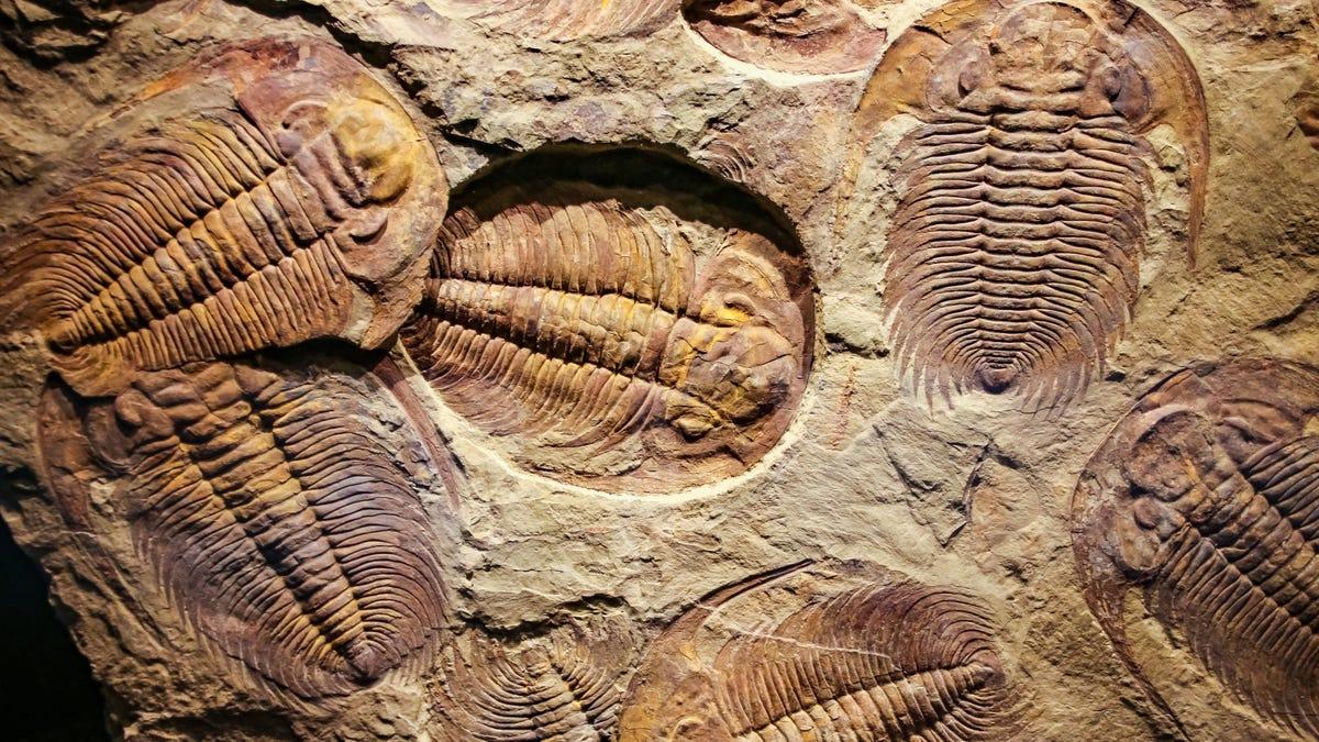 فسیل چیست؟