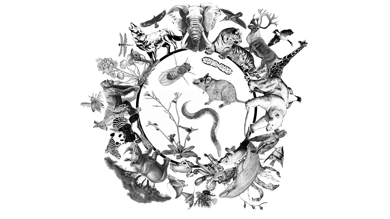 منظور از تنوع زیستی چیست؟