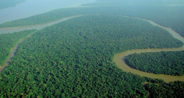 جنگل بارانی چیست؟