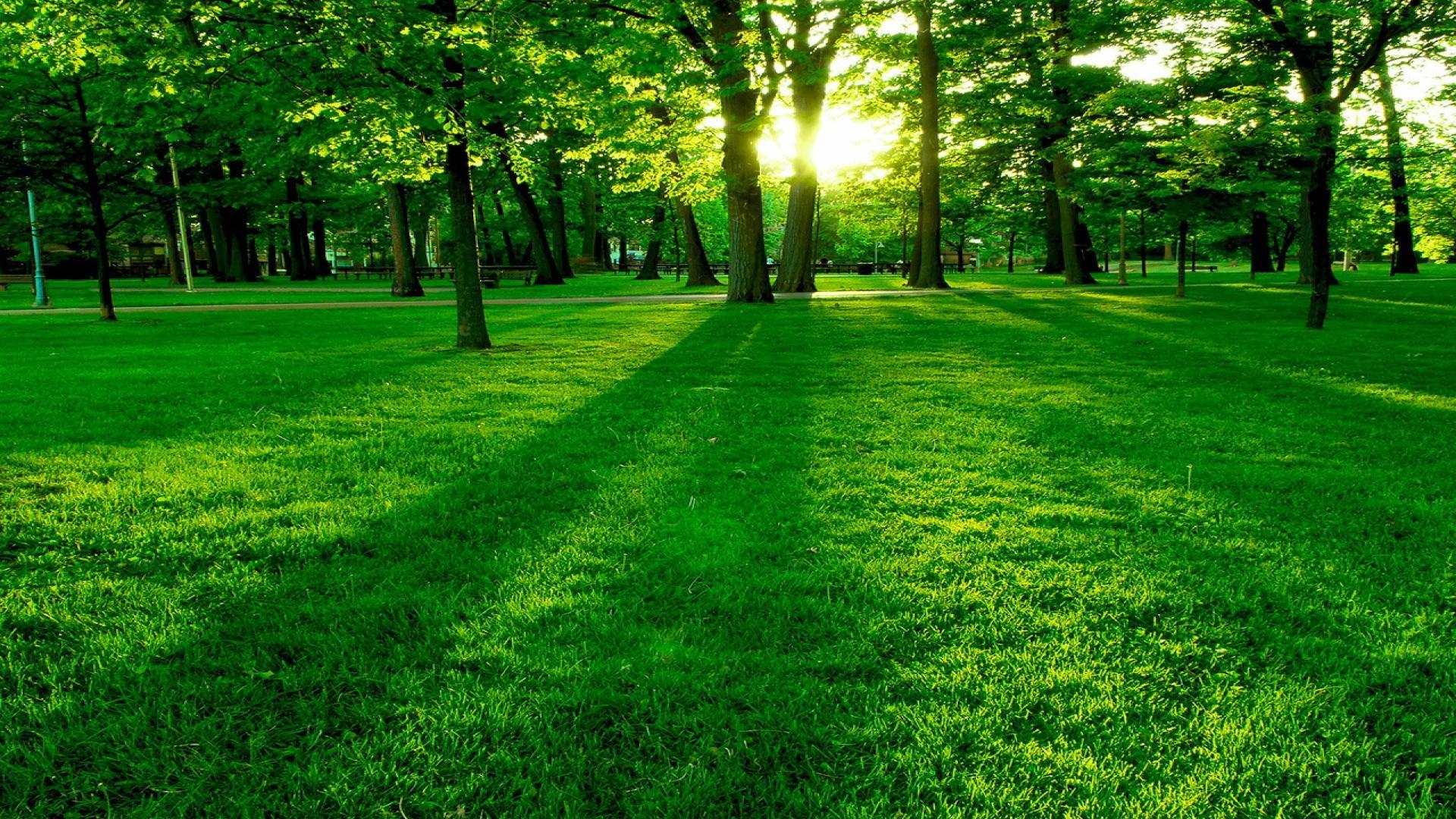 تعبیر مشاهده سبزه و سبزی در خواب