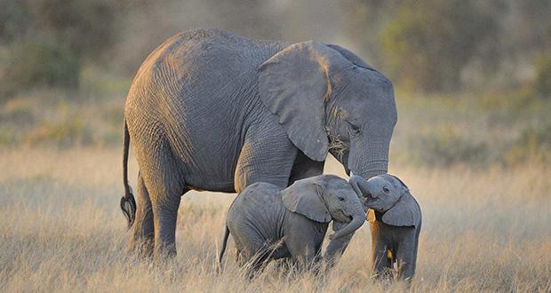 حیوانات چگونه نوزادان خود را می شناسند؟