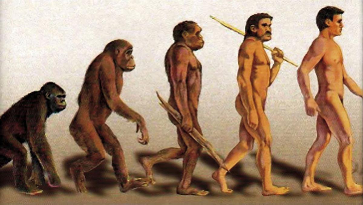 نظریه تکامل داروین چیست؟