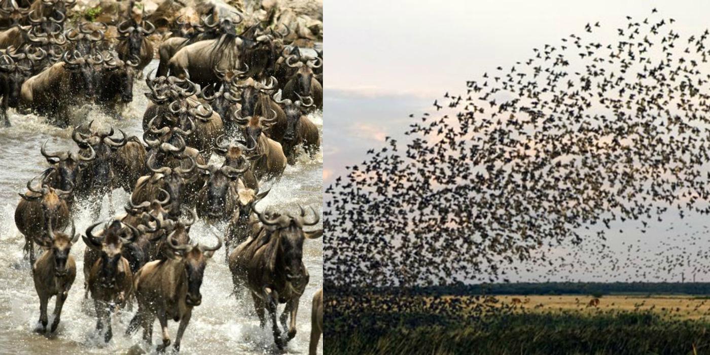 چگونه حیوانات زمین لرزه را پیش از وقوع حس می کنند؟