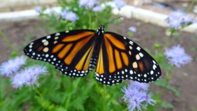 با زندگی پروانه ها آشنا شوید
