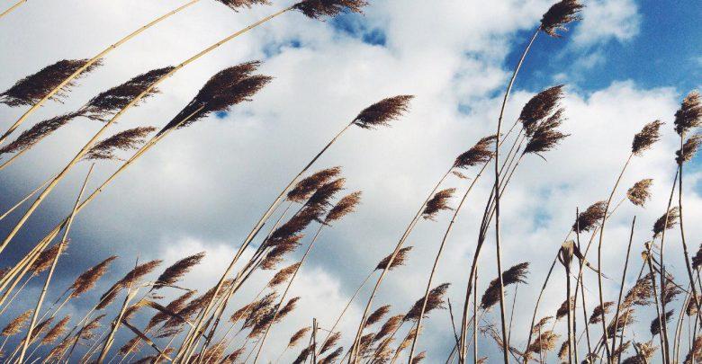 باد چگونه می وزد؟