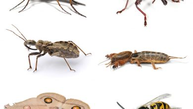 حشرات چگونه رشد و تولید مثل می کنند؟