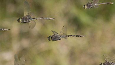 اگر همه حشرات نابود شوند، چه می شود؟