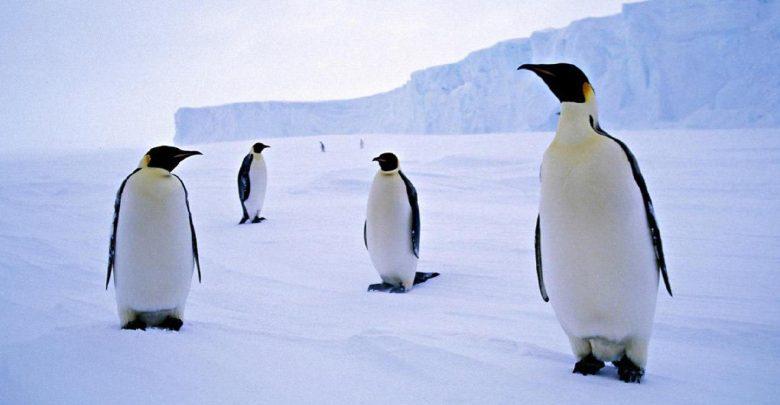 پنگوئن ها کجا زندگی می کنند؟