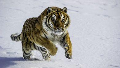 جانوران برای بقا، چه راهکارهایی دارند؟