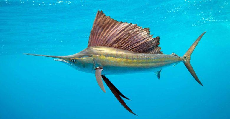 جانوران آبزی با چه سرعتی شنا می کنند؟