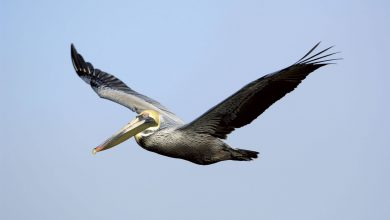 چرا ما نمی توانیم همانند پرندگان پرواز کنیم؟