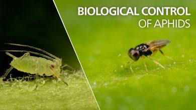 نگاهی به روش کنترل زیستی آفت های گیاهان