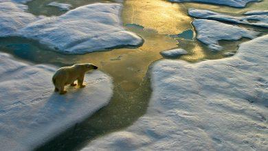 از کجا می دانیم زمین دچار تغییر اقلیم شده است؟
