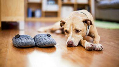چند روز می توانیم حیوان خانگی را در خانه تنها بگذاریم؟