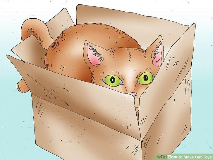 استفاده از جعبه به عنوان اسباب بازی برای گربه ها