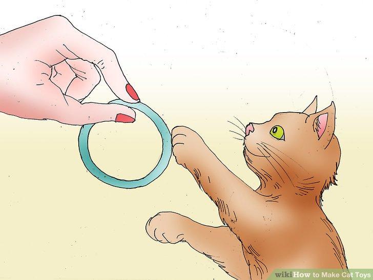 استفاده از حلقه های پلاستیکی برای بازی گربه ها
