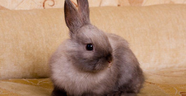 آیا خرگوش حیوان خانگی مناسبی است؟