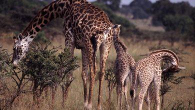 موجودات زنده چگونه خود را با محیط سازگار می کنند؟