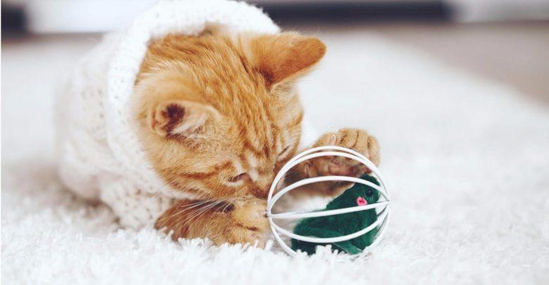 چگونه با وسائل دور ریختنی برای گربه اسباب بازی بسازیم؟