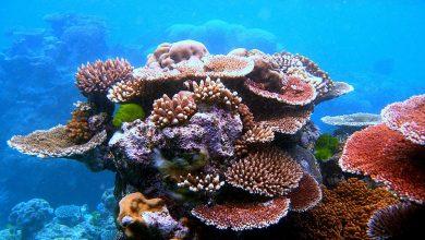 مرجان دریایی چیست؟