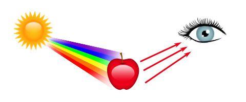 تمام رنگ های نور خورشید را به جزء نور قرمز جذب و فقط نور قرمز را منعکس کرده است.