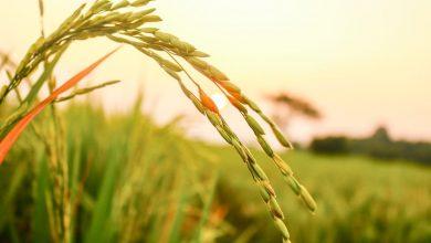 گرمایش جهانی و سوء تغذیه