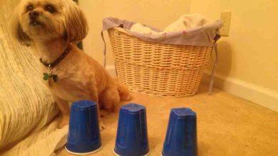 تست ضریب هوشی برای سگ ها