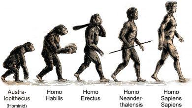مستند سیر تکامل انسان