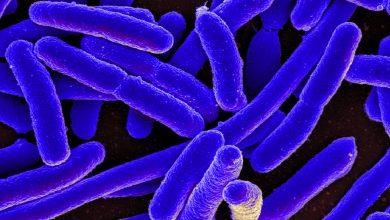 مستند انتقام باکتری ها