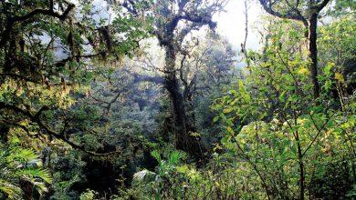 جنگل های استوایی گرمسیری در چه مناطقی پرورش می یابند؟