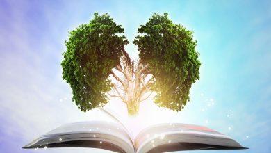 با خواندن یک کتاب فوق العاده، چه اتفاقی در مغز شما می افتد؟
