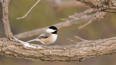 با این دوربین دنیا را از چشم پرندگان ببینید