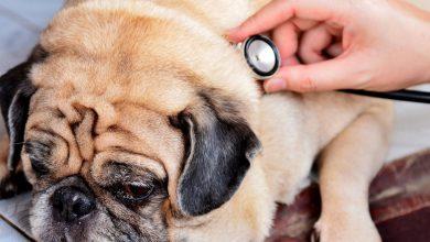 11 کار که عمر سگ تان را کم می کند