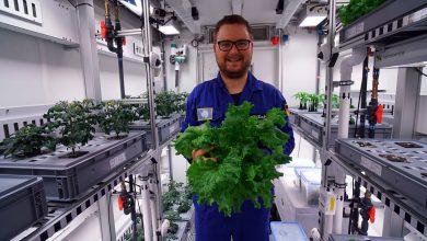 فضانوردان در ایستگاه فضایی بین المللی در تلاش هستند گیاه در فضا پرورش دهند