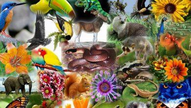 تنوع زیستی چه ارتباطی به ما دارد؟