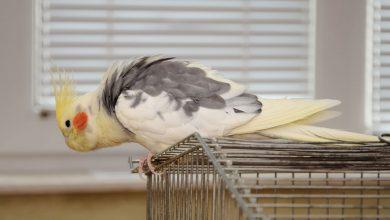 آداب نگهداری از پرندگان در خانه